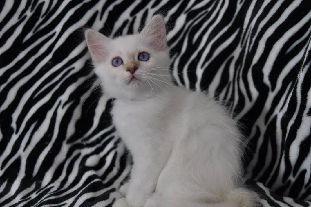 N'White Pearl