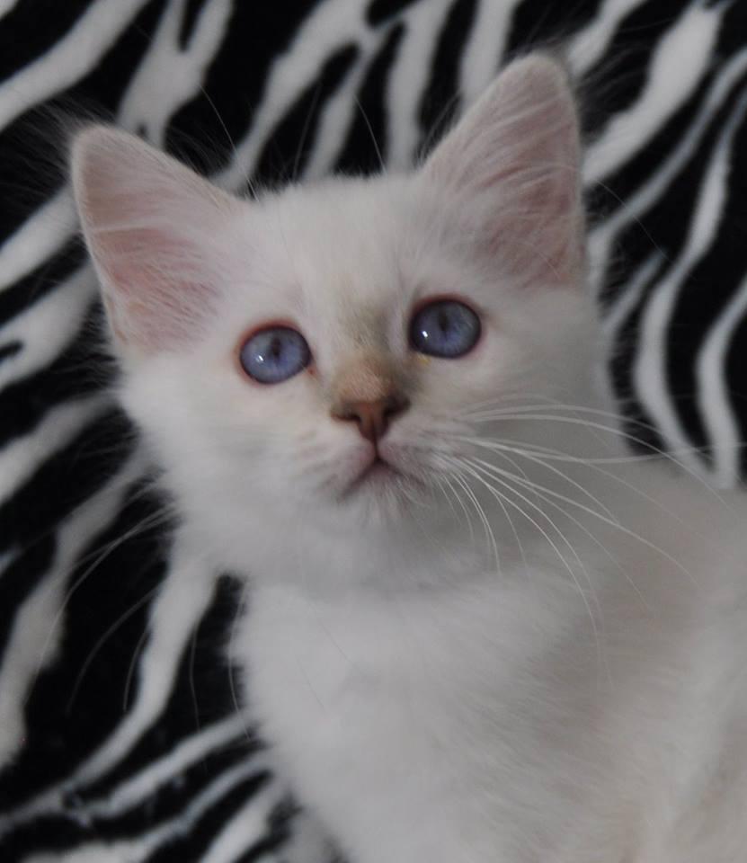 N'White Pearl - 2 mois - RESERVEE